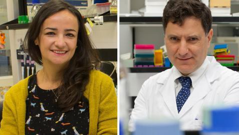 Los investigadores del CIMA Maite Huarte e Ignacio Melero