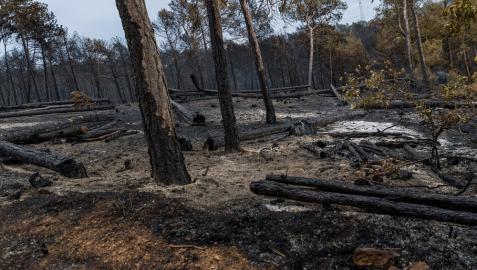 El incendio obligó este domingo a evacuar a una quincena de personas.