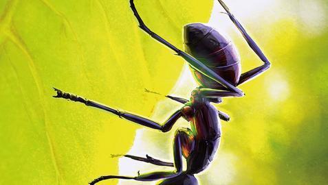 Carátula del libro 'Las hormigas', de José Manuel Vidal