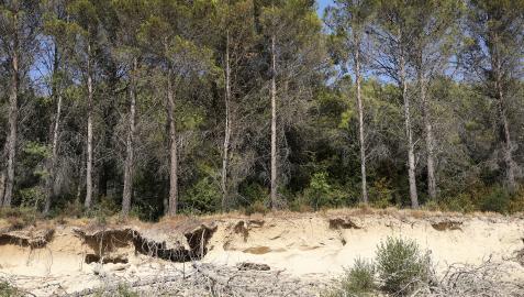 La erosión y el incremento de las temperaturas comen terreno a las coníferas del norte de la Comunidad foral