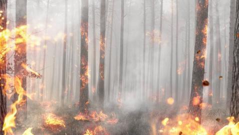 Incendio forestal en un bosque