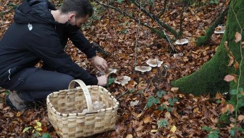 Provisto de cesta de mimbre, un joven recoge unos ejemplares en un paraje del norte de Navarra.