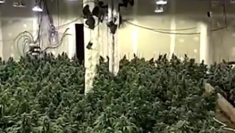 Los Mossos localizaron 8 plantaciones de marihuana en naves y locales