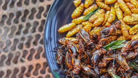 Plato de insectos
