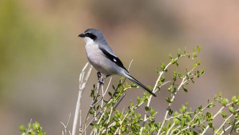 SEO/BirdLife celebra el fin de semana del 2 y 3 de octubre el 'Día de las aves'