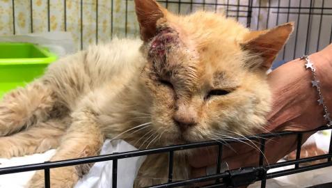 Gato afectado por el volcán de La Palma