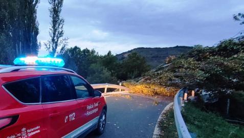 Árbol caído sobre la vía en la carretera de acceso a Gallipienzo viejo