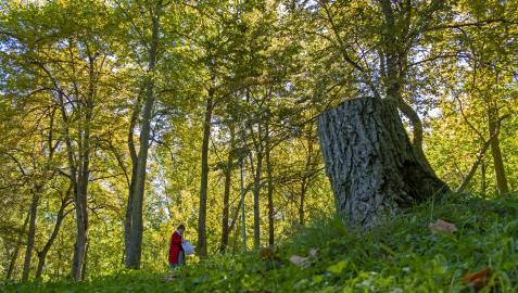 Una mujer pasea por el parque de Los Llanos en Estella