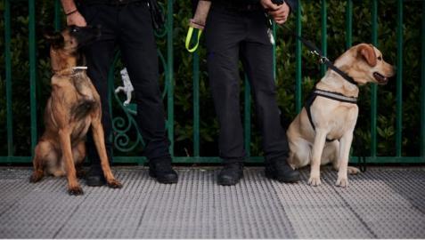 Perros de la Policía Municipal de Pamplona